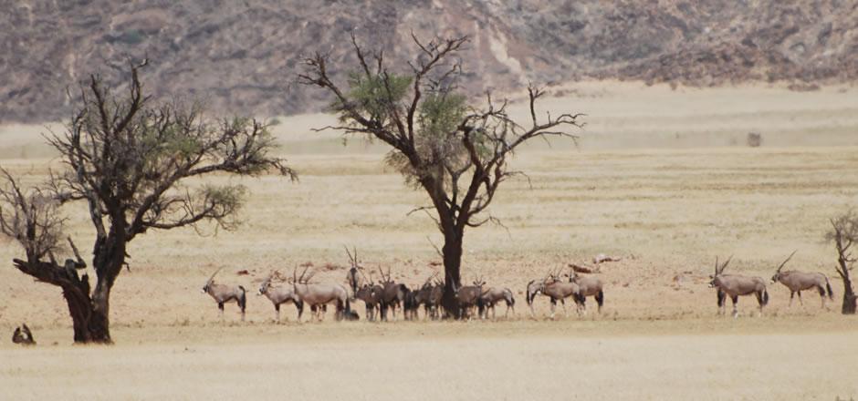 Mammadù Non Profit Organization - Perchè la Namibia - Slider Bg 05
