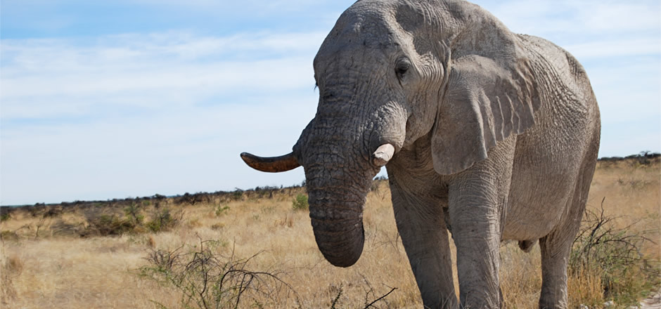 Mammadù Non Profit Organization - Perchè la Namibia - Slider Bg 07