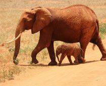 Elephant Photography